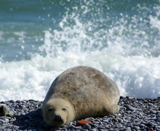 Seal on a Beach