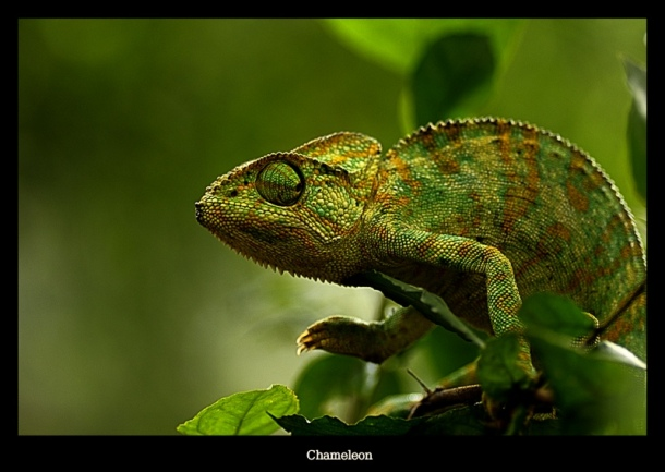 Adapt A Chameleon Mindful Fitness mindfitmove Learn to adapt what is mindfulness?