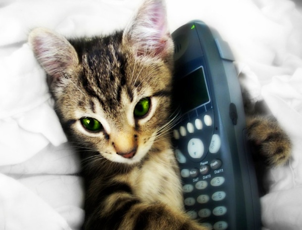 Adorable cat makes phone call, MindFitMove, Mindful Fitness