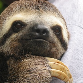 Look Mom I'm a Sloth! – Making an Exercise ComeBack