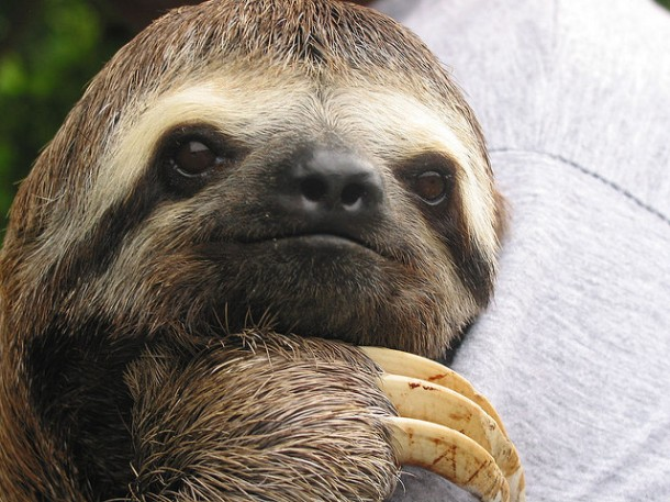 #Blog Sloth Praziquantel